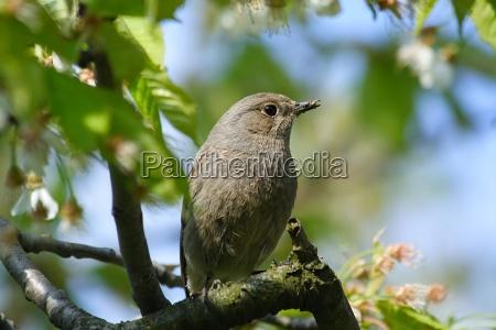 bird birds insectivore insectivorous