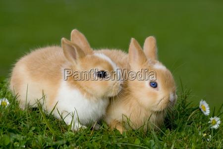 bunnies, children - 1218799