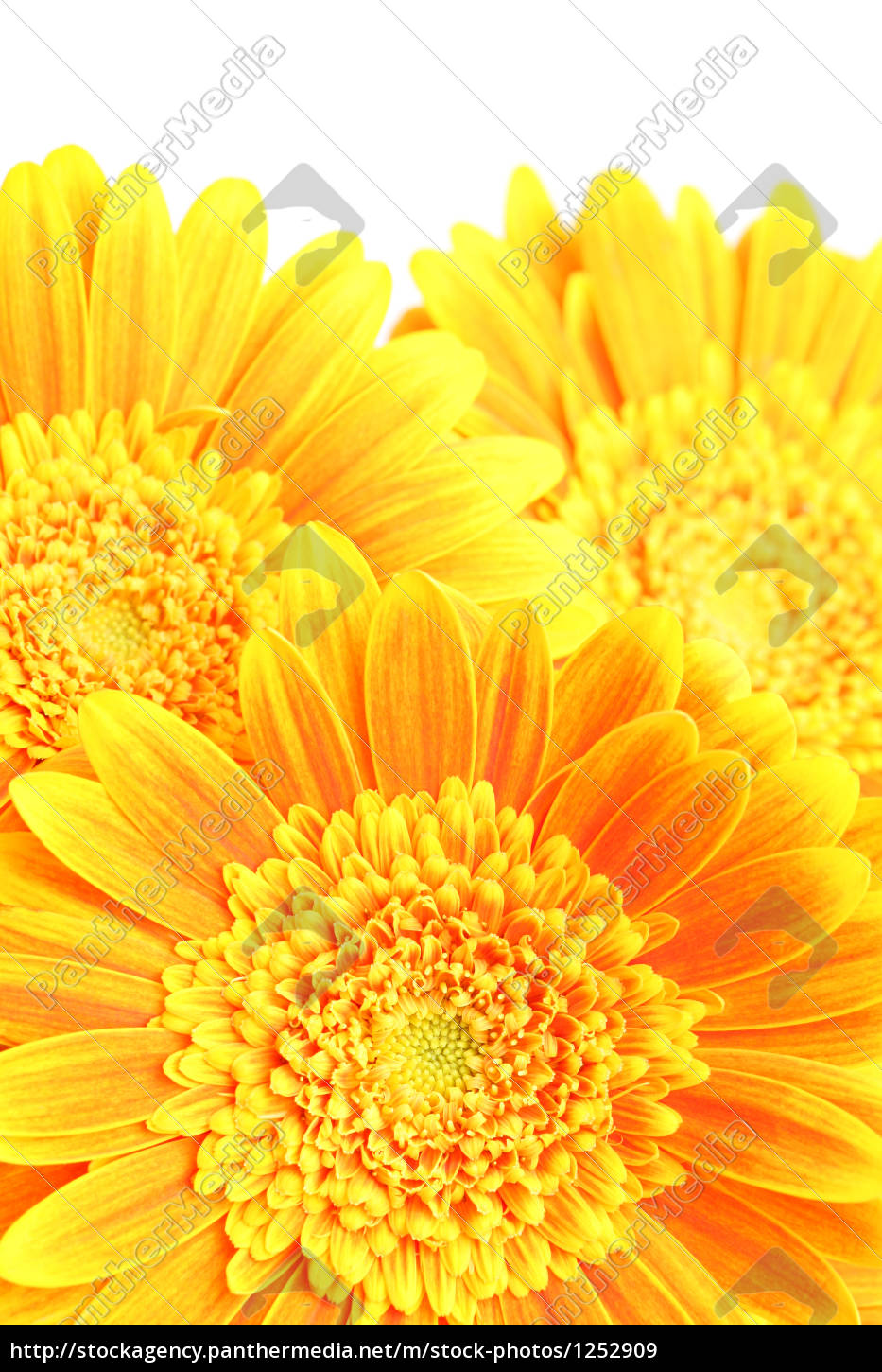 flowers, background - 1252909