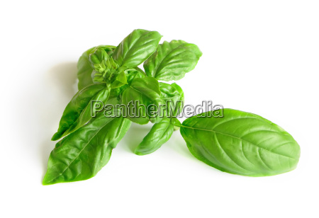 basil with white background