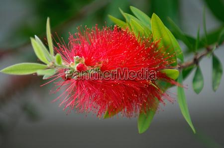 exotic flower in luis park