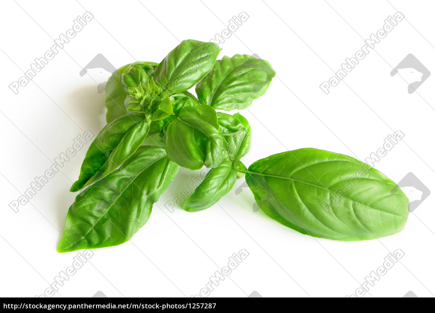 basil, with, white, background - 1257287