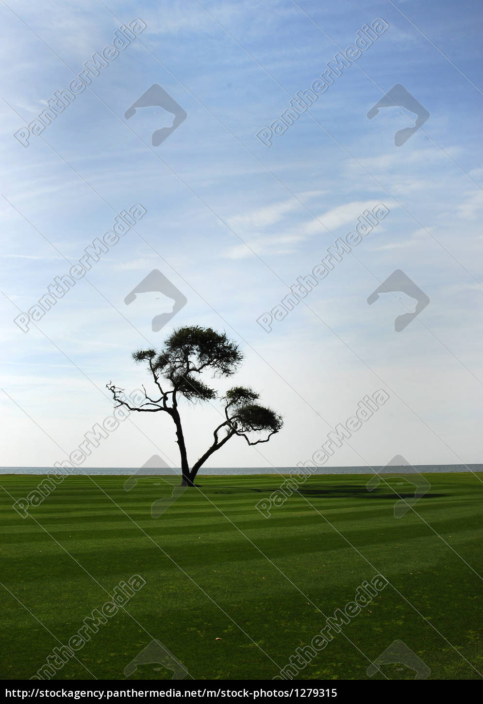 tree, silhouette, alone, lonely - 1279315