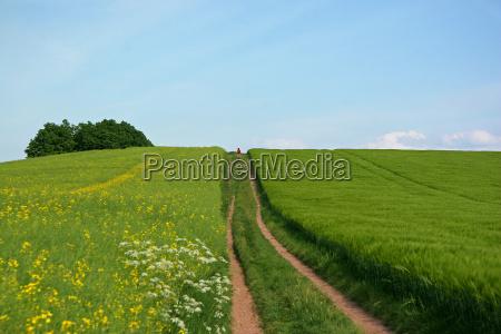 dirt road field path way firmament