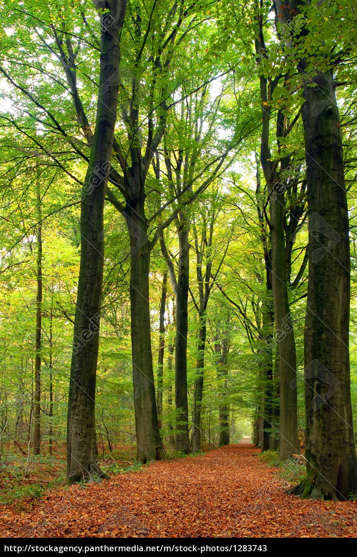 path, through, lush, forest - 1283743