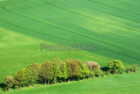 green field sense row a row