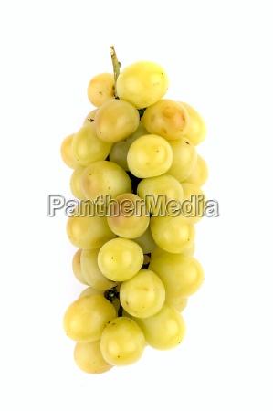 white grapevine