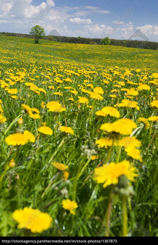 spring, landscape. - 1307873