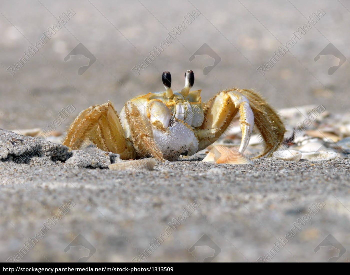 beach, crab - 1313509