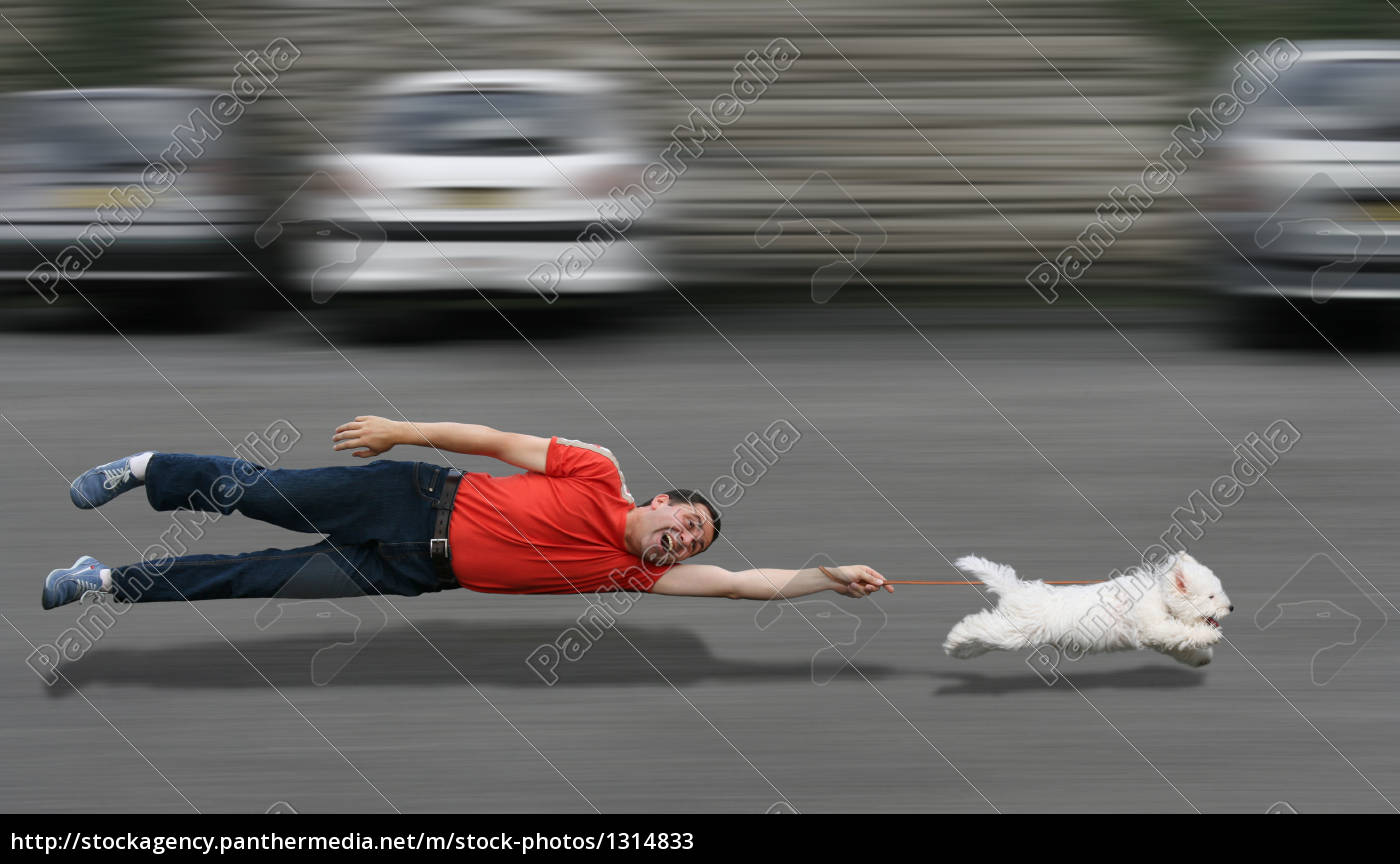 canine, education - 1314833