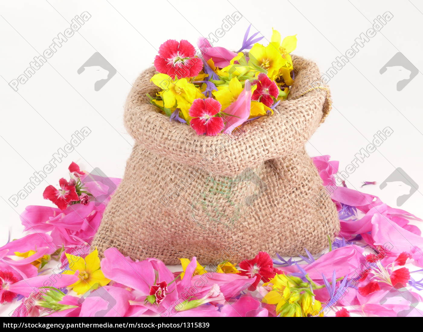 flowers, for, you - 1315839