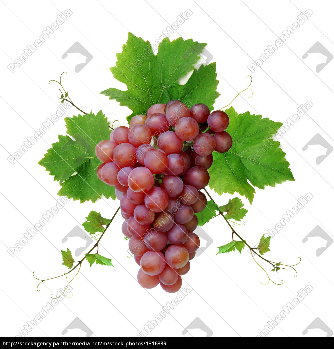 decorative, pink, grape - 1316339