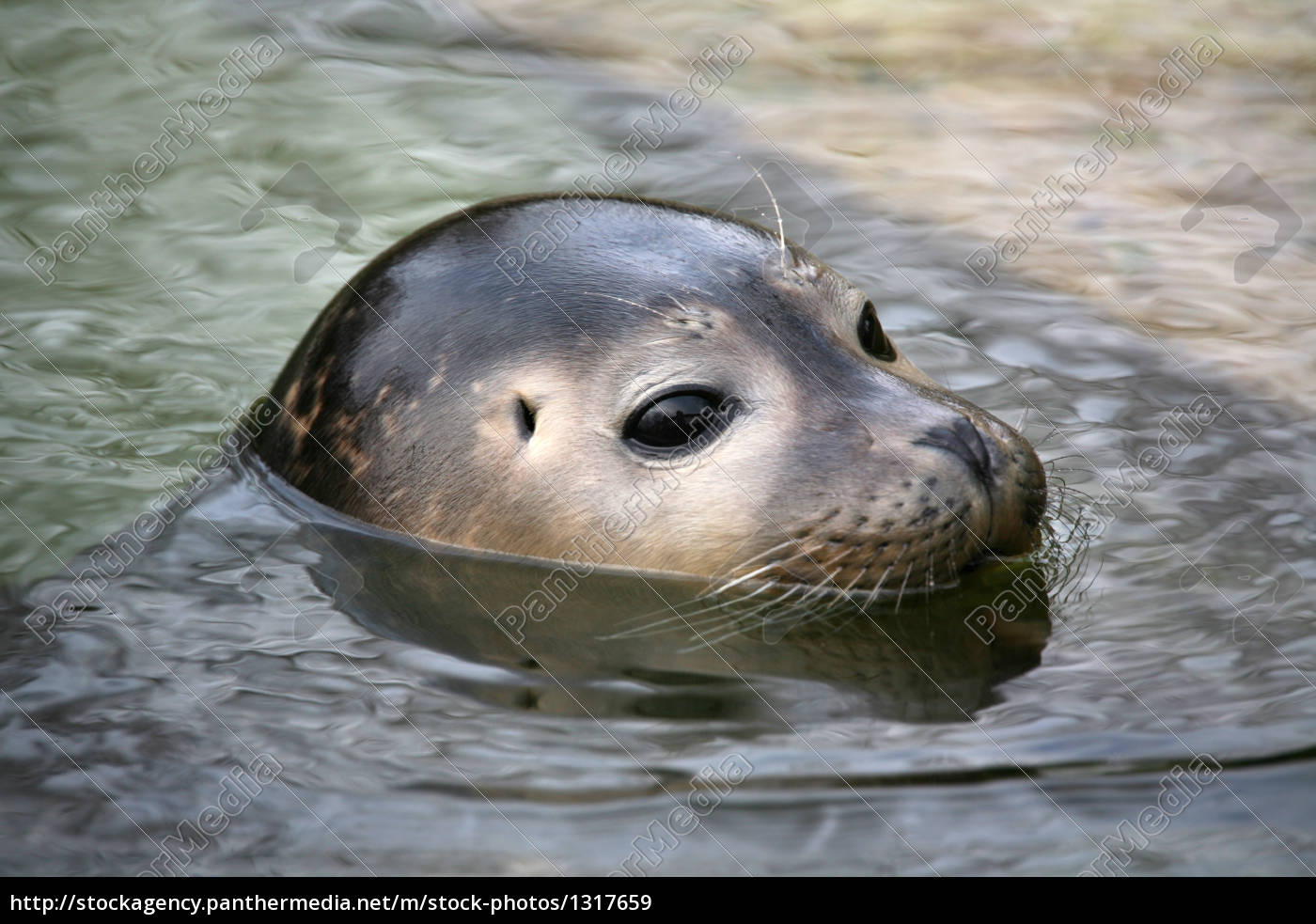 seal - 1317659