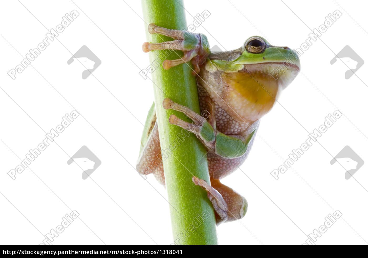 tree, frog - 1318041