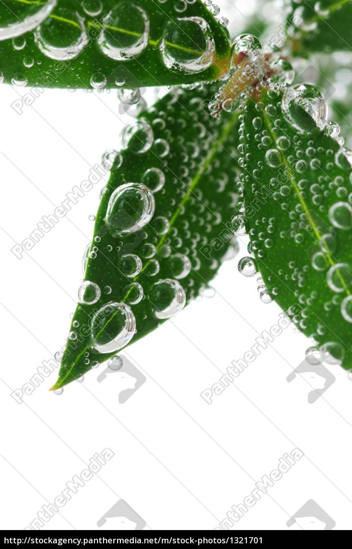 green, leaves, in, water - 1321701