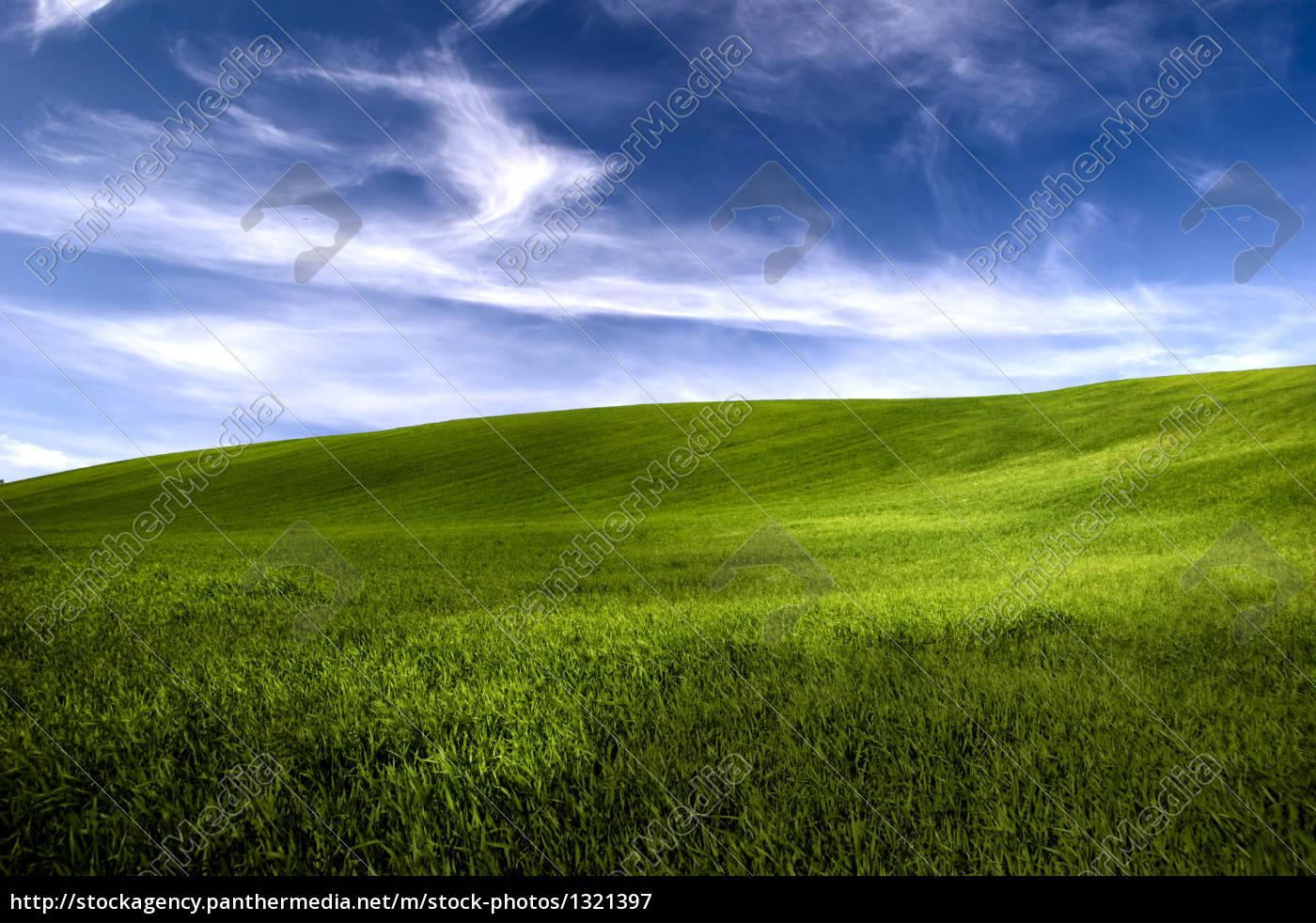 spring, field - 1321397