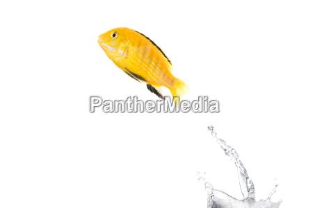 jumping, fish - 1325149