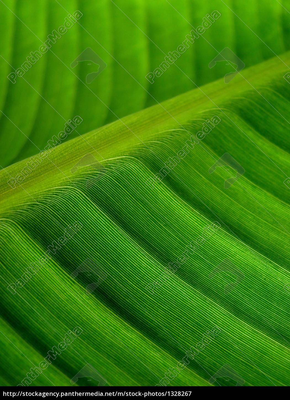 banana, palm, leaf, green, dark - 1328267