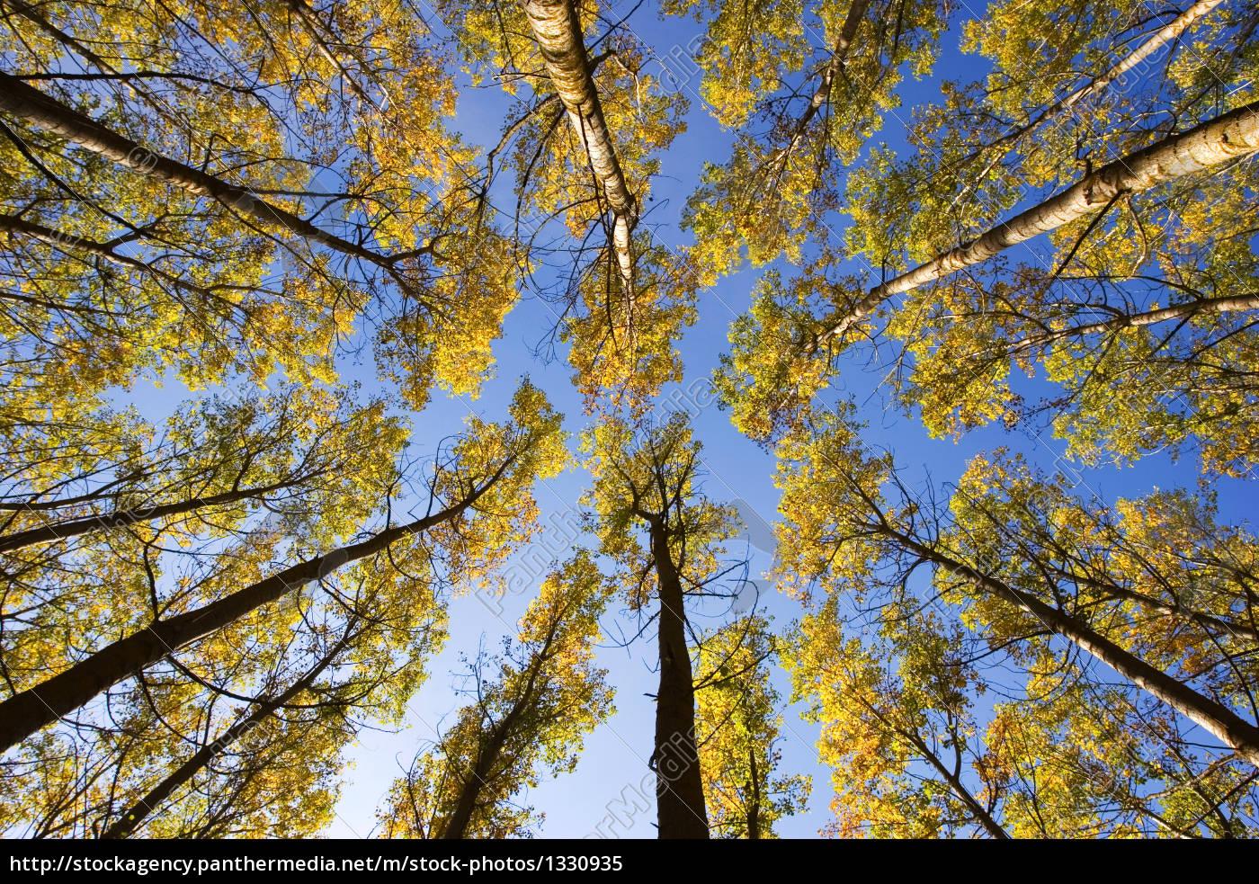 trees, in, autumn - 1330935