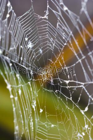 spider, web - 1333135