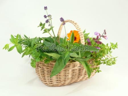 erbe aromatiche origano citronella erbe