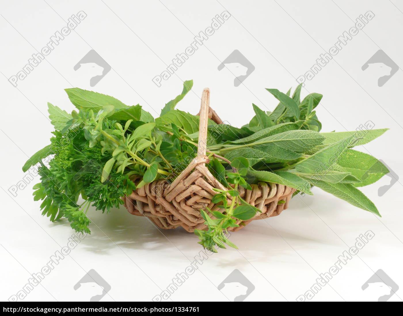 garden, herbs - 1334761