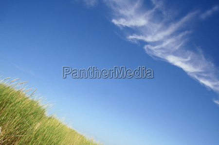 grasses in the summer breeze