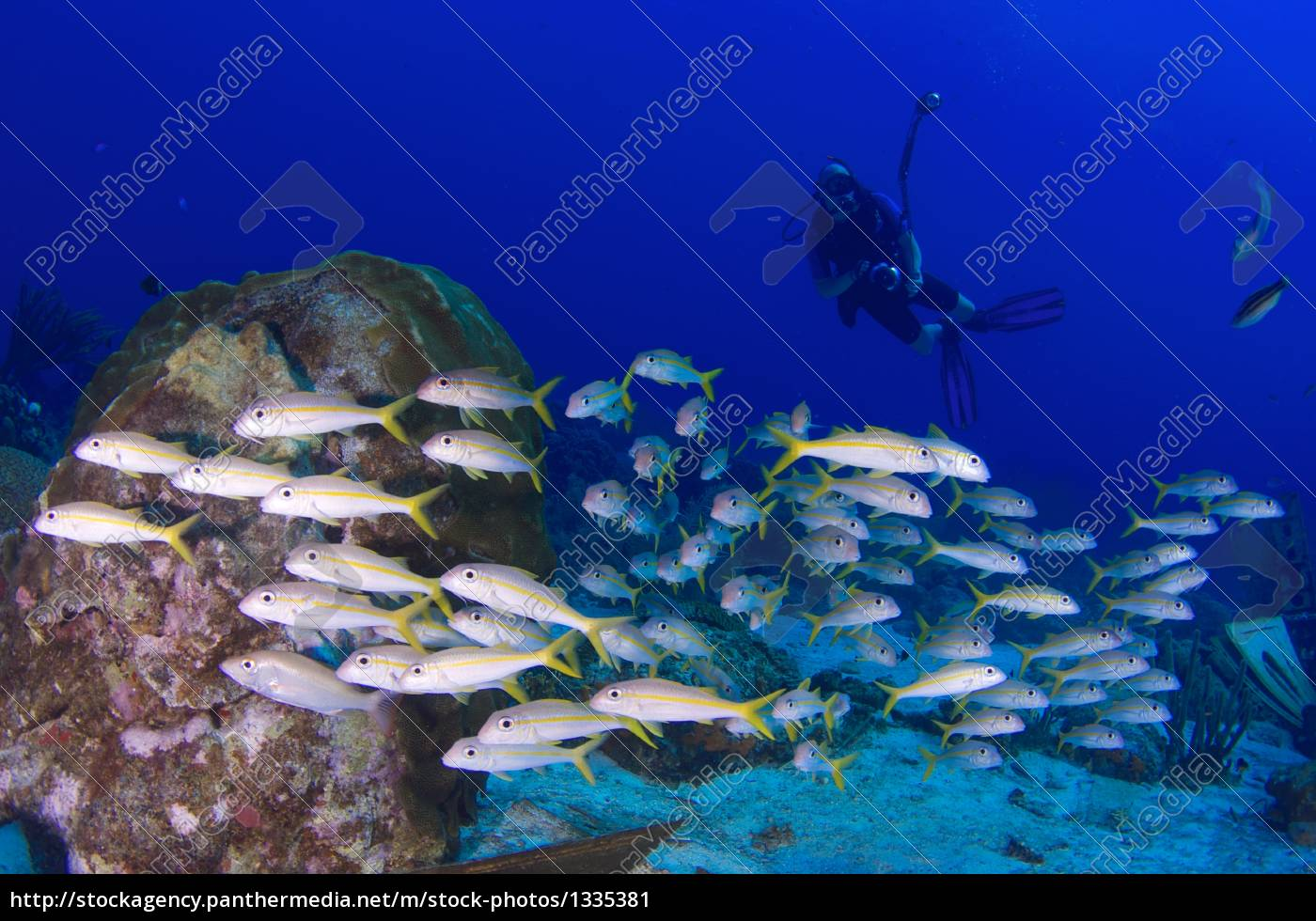 fish, swarm, and, divers - 1335381