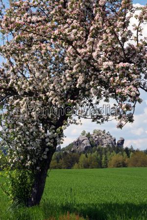 spring in the elbsandsteingebirge