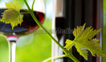 glass, and, bottle, of, red, wine - 1340811