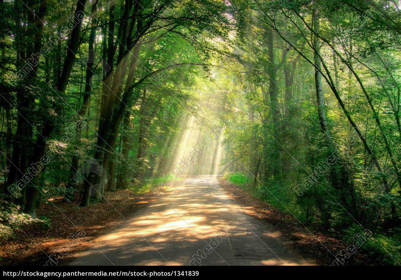 beam, path - 1341839