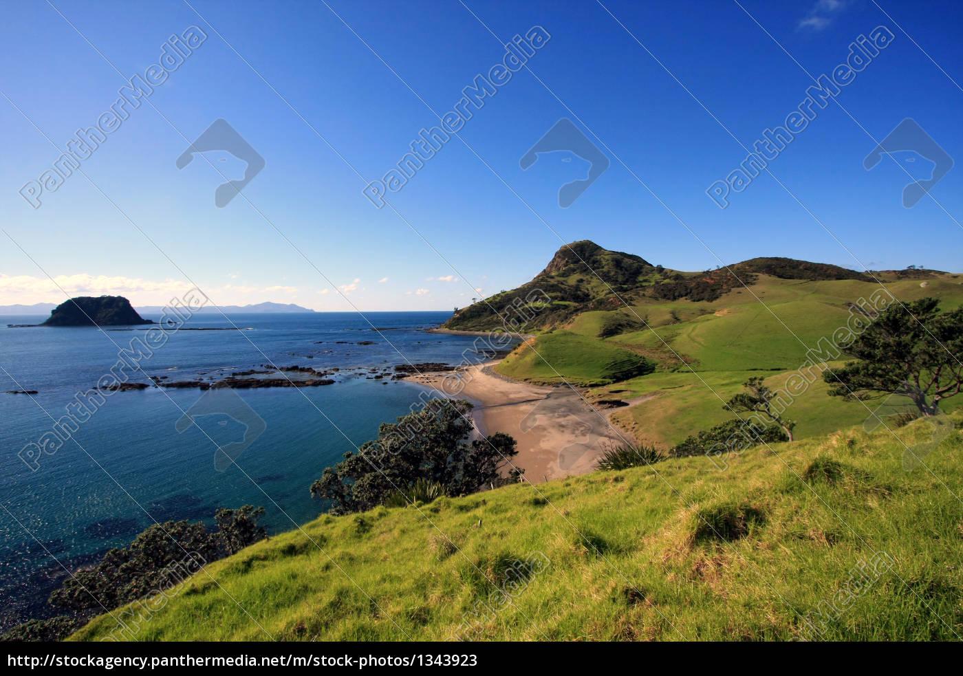 coromandel, coastal, walkway - 1343923