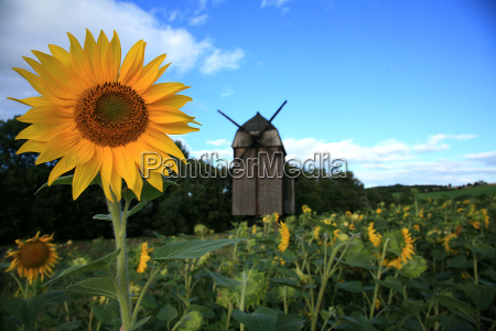 sunflower, with, mill - 1343239