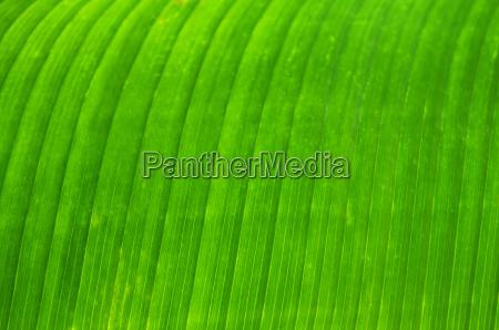 green, leaf, background - 1346833