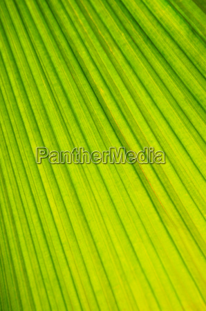 palm, tree, leaf, background - 1346801