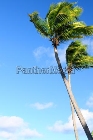 palms, on, blue, sky - 1346843