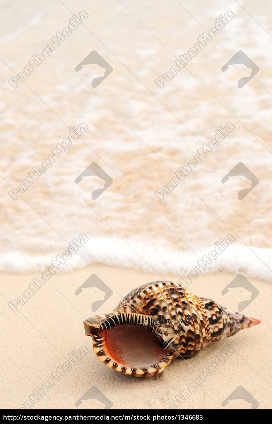 seashell, and, ocean, wave - 1346683