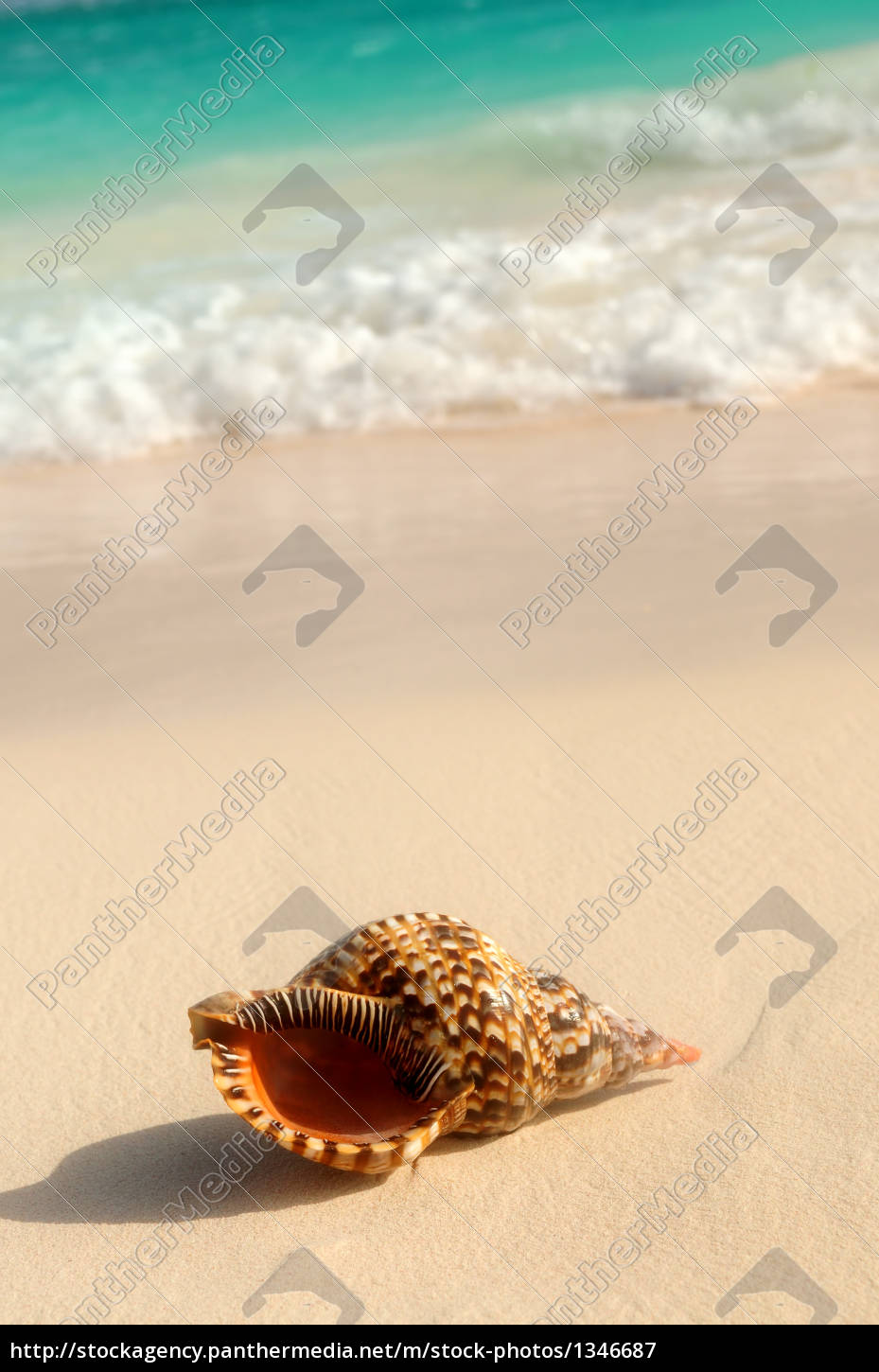 seashell, and, ocean, wave - 1346687