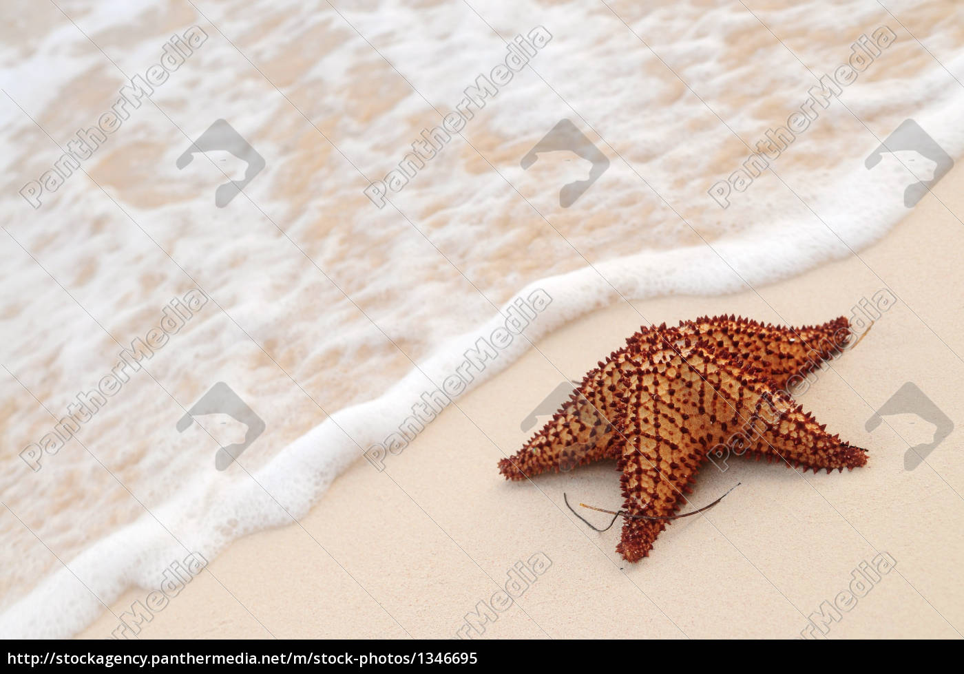 starfish, and, ocean, wave - 1346695