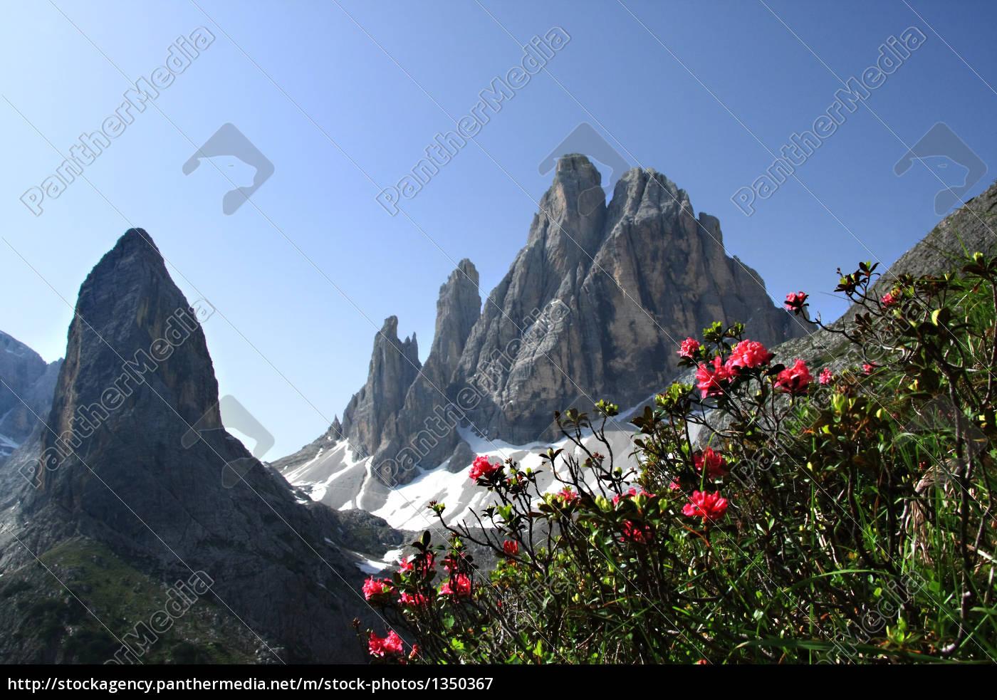 alpine, flowers - 1350367