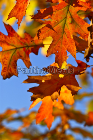 autumn, leaves - 1351679
