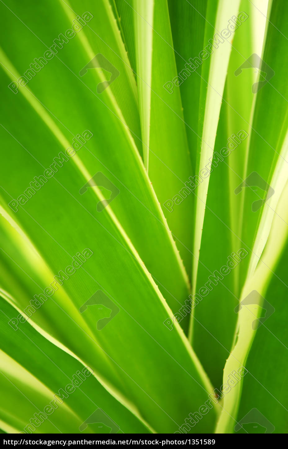 tropical, leaves - 1351589