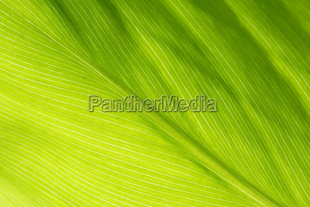 leaf - 1353795