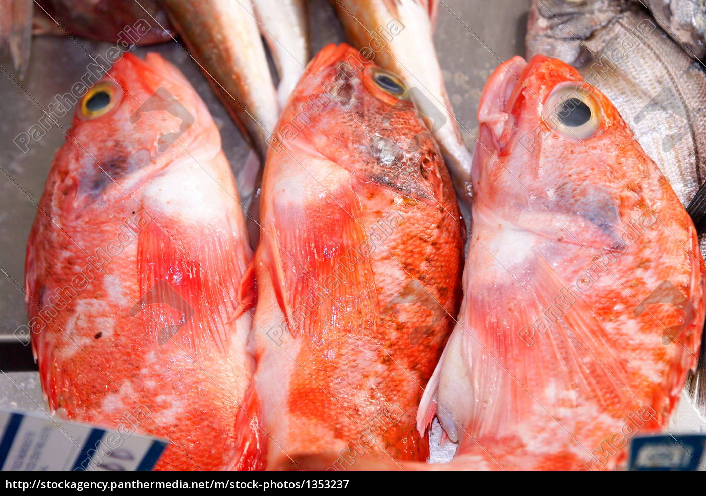 red, mullet - 1353237