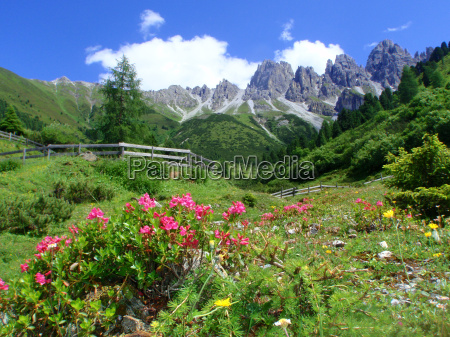 flower flowers plant tyrol scenery countryside