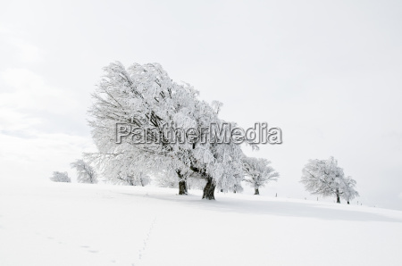 winter, landscape, 3 - 1356783