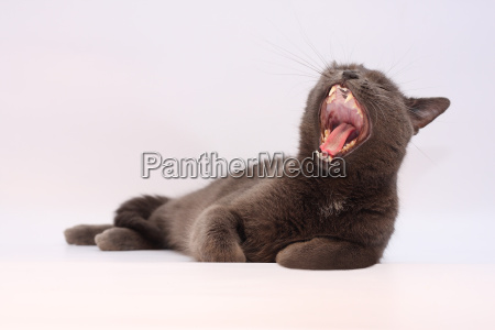 simon, the, cat, 1 - 1357853