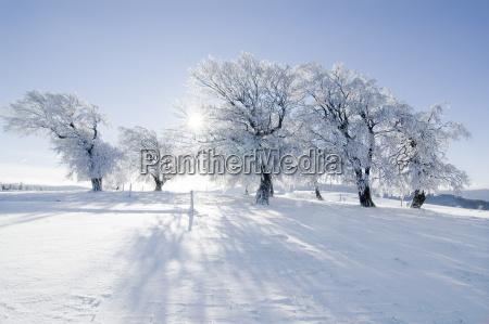 winter, sun, 7 - 1358957