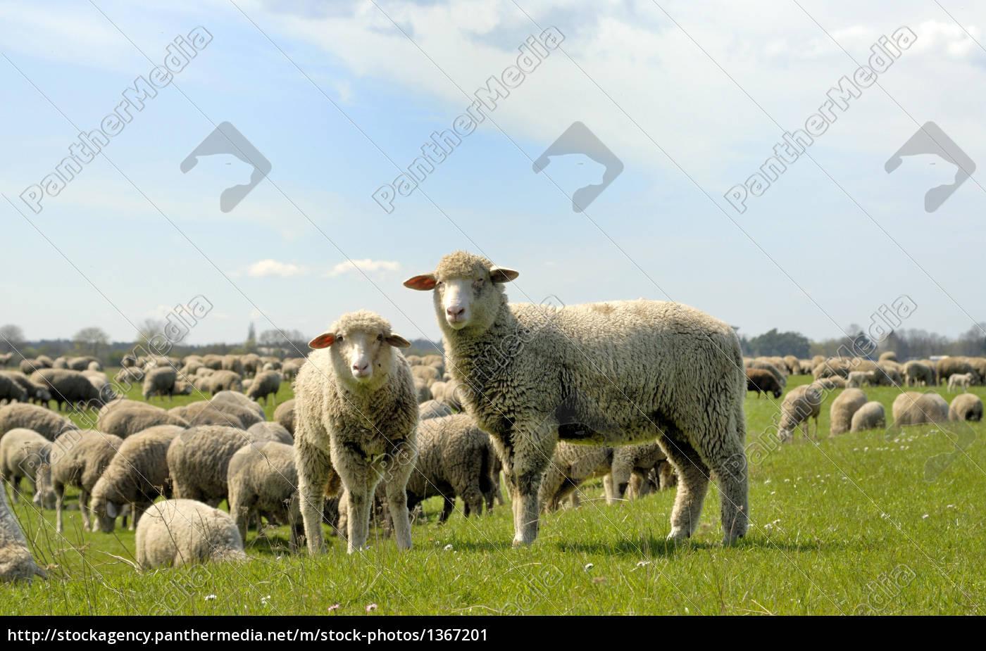 animal, life - 1367201