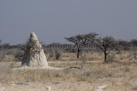 termite hills in etosha national park
